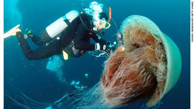 медуза в океане