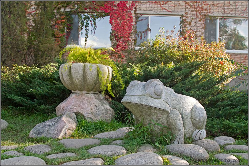 лягушка в ботаническом саду владивостока