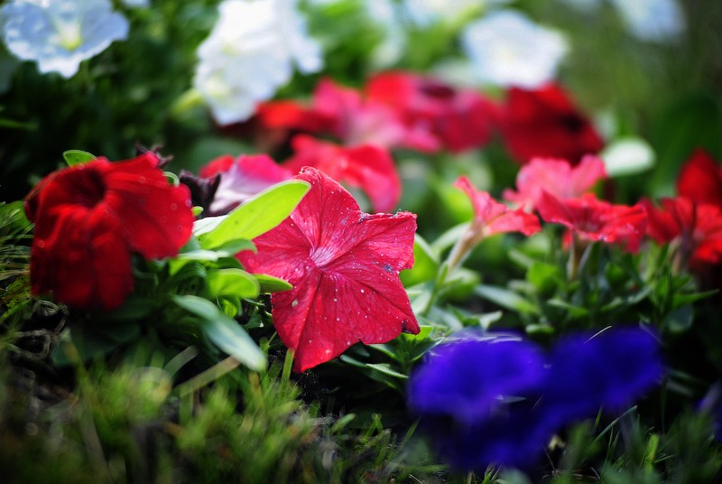 цветы в саду владивостока