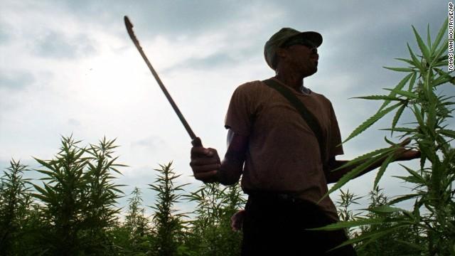 Марихуана незаконна на Ямайке