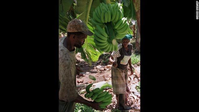 Родина торговли бананами и туризма