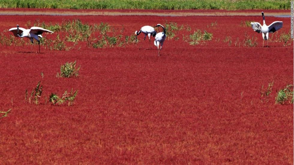 Красный Берег, Паньцзинь, Китай