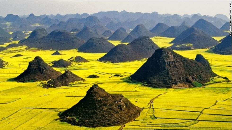 Рапсовые цветочные поля, Китай