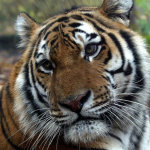 Национальный парк Зов тигра