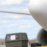 Насколько опасна перевозка животных в самолете?