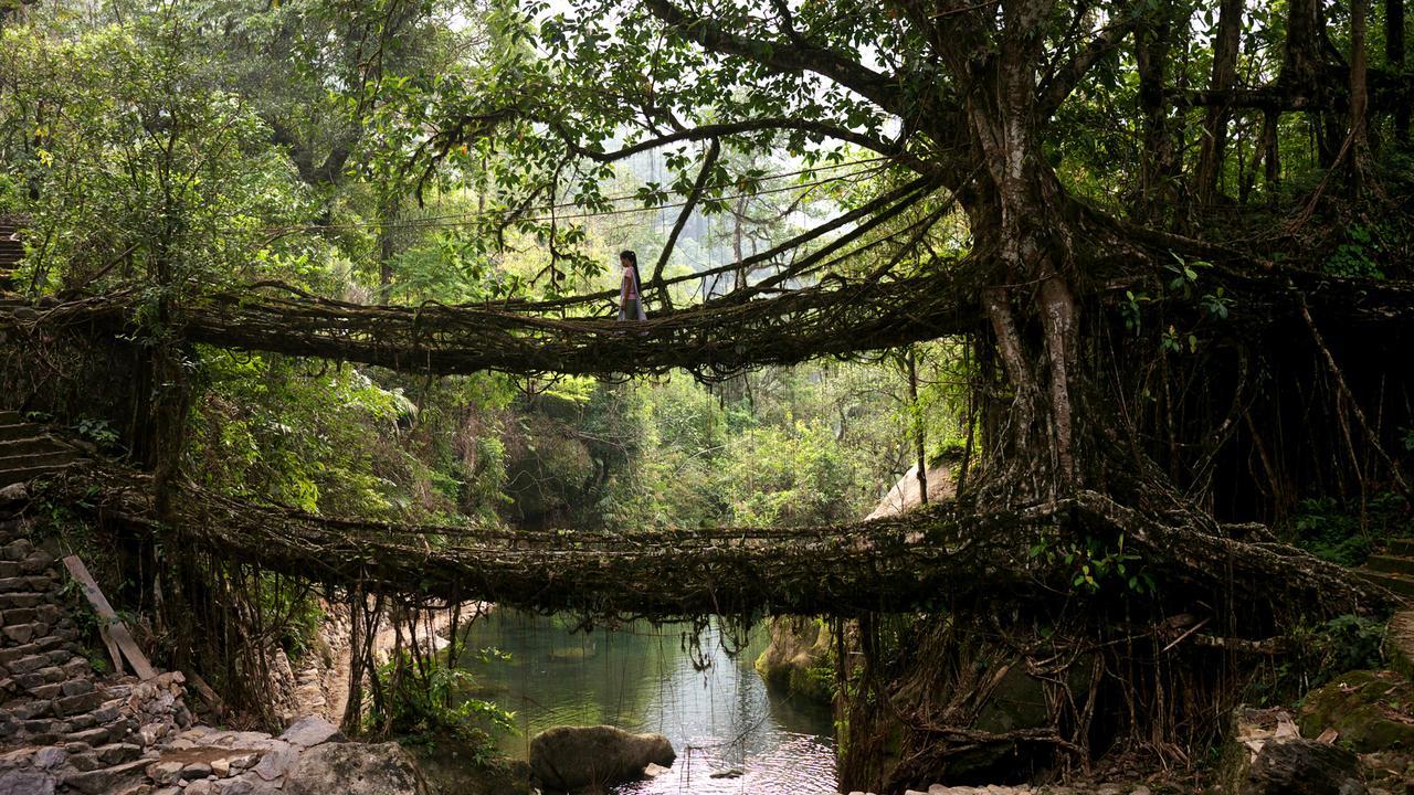 Мосты из корней - чудо природы в Индии