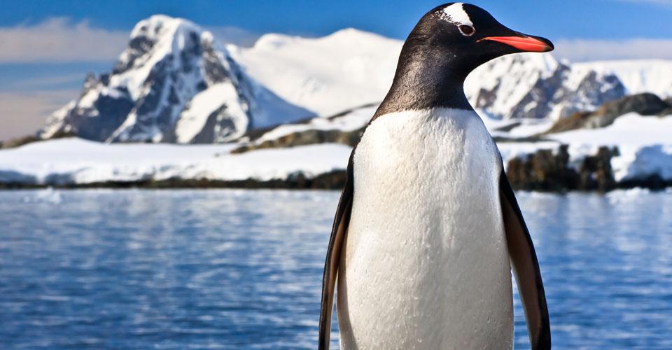 Экскурсии и работа в Антарктиде 2