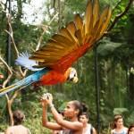 Парк птиц в Бразилии