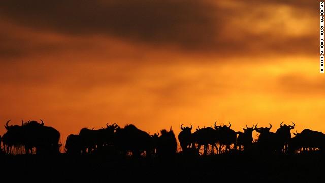 sunsets-maasai-mara-national