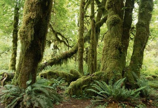 тропический лес в африке