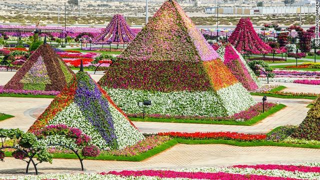 45 миллионов цветов