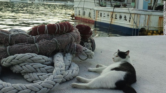 Кошачьи острова в Японии