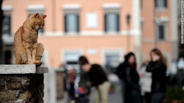 Кошки на развалинах Рима