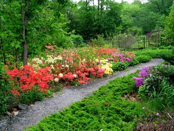 ботанический сад владивостока
