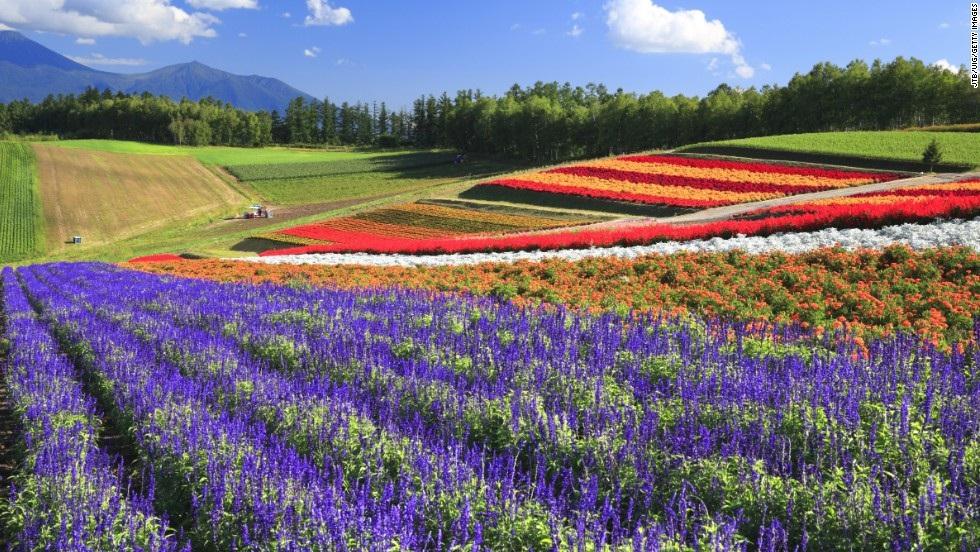 Цветочные поля, Хоккайдо, Япония