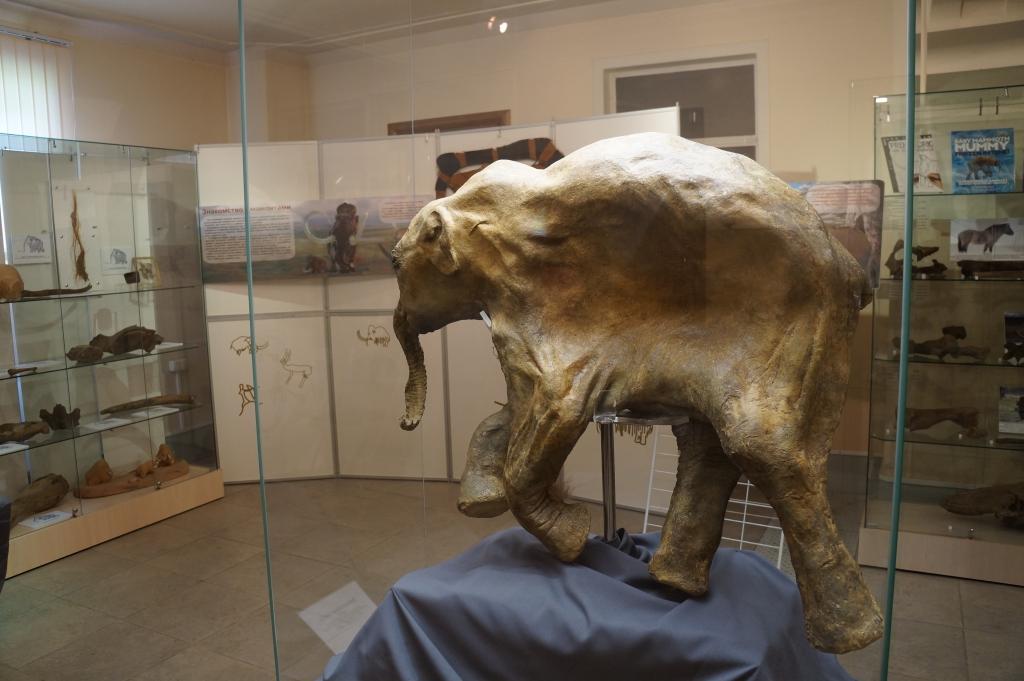 Краеведческий музей Южно-Сахалинска 3